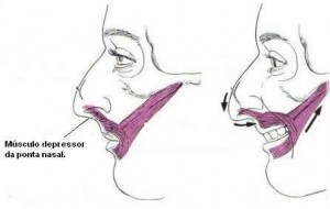ação do musculo depressor do septo nasal